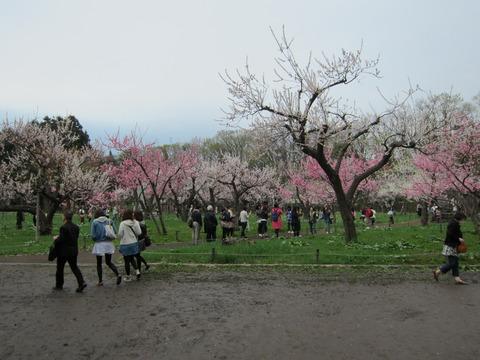 2d60f047 s - 北海道の春の生活25 ~桜 / 円山公園 / 花見~