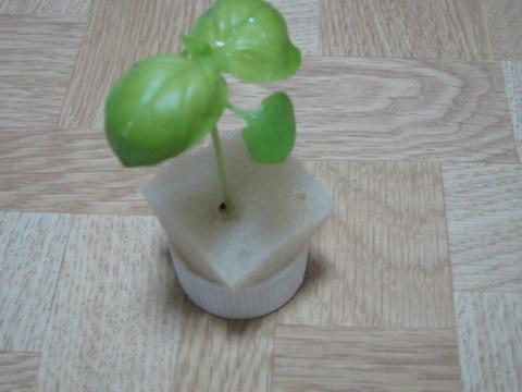 4c491362 s - 自給自足的生活の準備14 ~お米(稲)の水耕栽培に失敗~