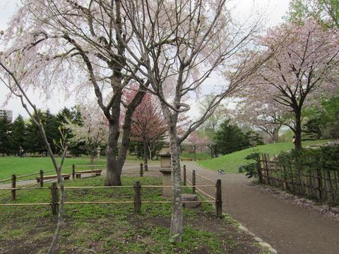 54e678d6 s - 北海道の春の生活25 ~桜 / 円山公園 / 花見~