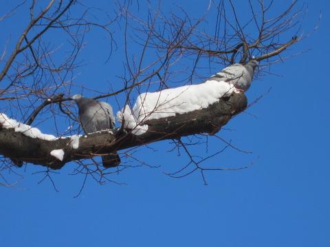 5d1f6f5a s - 2013年 さっぽろ雪祭りPart1 ~初日の天気気温、他大雪像紹介~