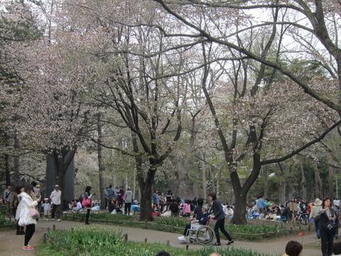 5ebaebb5 s - 円山公園の花見2013