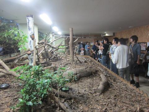 6907570b s - 円山動物園 / 夜の動物園
