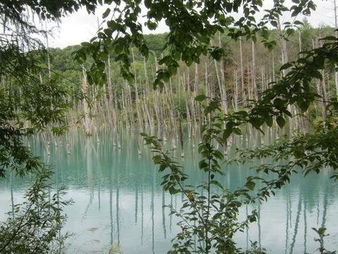 7c66b5c2 s - 2014富良野旅行Part4 ~「日本で一番美しい道」と青い池~