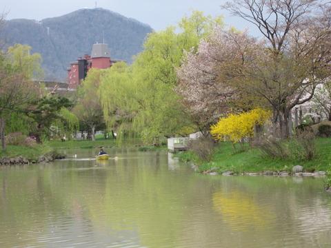 7dfb8042 s - 北海道の春の生活25 ~桜 / 円山公園 / 花見~