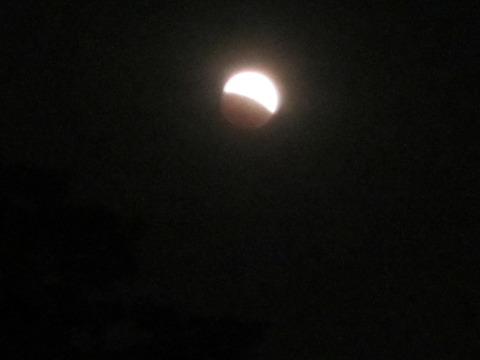 7f96a946 s - 北大の敷地で月食を見てきた