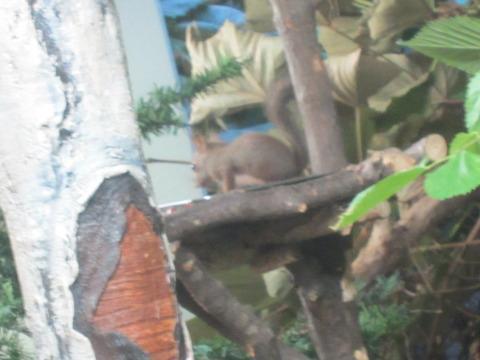 982cbcd5 s - 円山動物園 / 夜の動物園