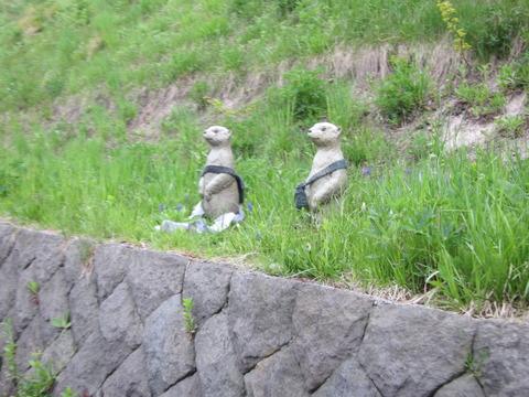 a569ff85 s - 札幌市内観光 ~野幌森林公園 瑞穂池~