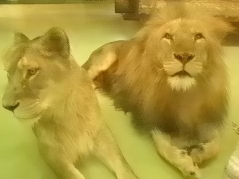 a804b4ac s - 札幌市内観光 ~冬の円山動物園~