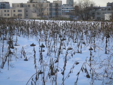 bd5e02e6 s - 北海道の冬の生活06 ~川が凍った!~