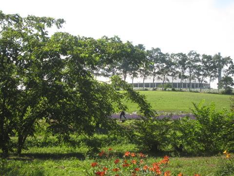 c72fd4aa s - 八紘学園の花菖蒲園な季節です2014