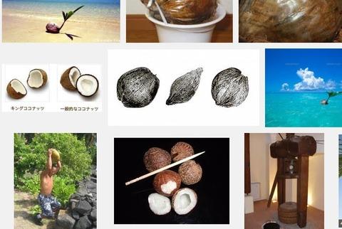 c95aa4a3 s - 椰子の実とココナッツの違い / 椰子の実の分類