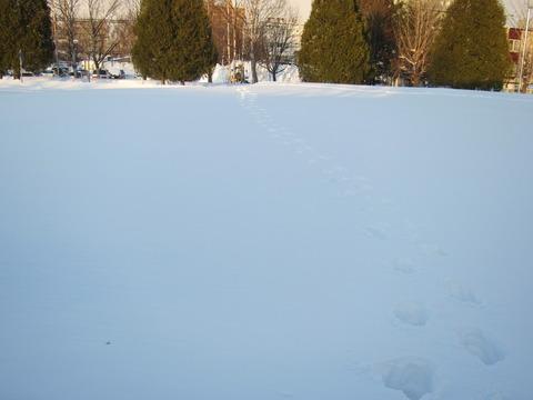 d1cde861 s - 北海道における今回の暴風雪について