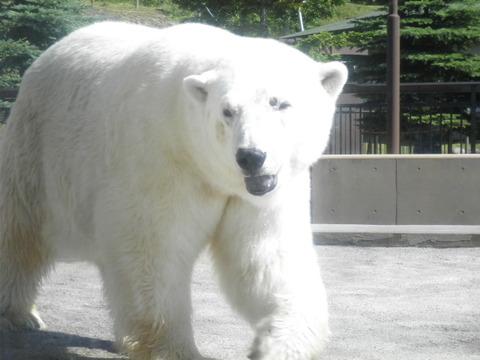 e5c7b03a s - 旭山動物園観光 ~層雲峡への道すがら~