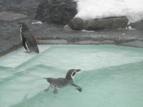 ea01c84d s - 札幌市内観光 ~冬の円山動物園~
