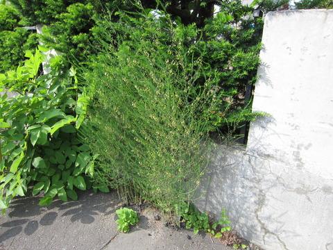 f54b23ab s - 北海道の春の生活29 ~6月の収支 / 向日葵はいつ代替わりするのさ~
