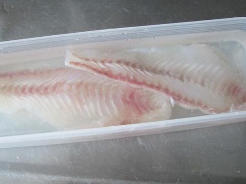f8dc28a0 s - 魚介類を干してみたヒラメ編