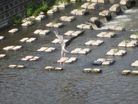 fead9a4c s - 札幌大通公園 ~ライラック祭り2013 前編~