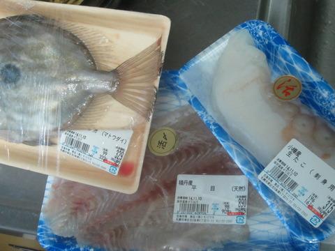 ff6f027b s - 魚介類を干してみたヒラメ編